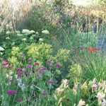 Wide Selection of Plants