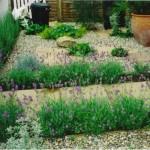 Lavender Edging