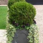 Container with Box Hedge Ball