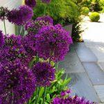 Pots For Striking Planting