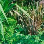Strong Visual Impact Using Foliage